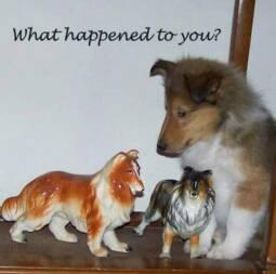 Collie statues and real puppy