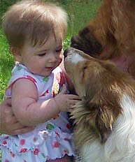 baby kissed by collie