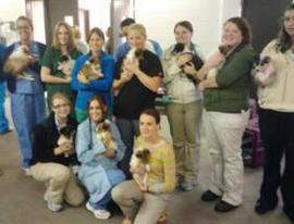 vet students holding puppies